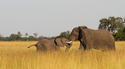 mg2451 - Bildung für den Artenschutz